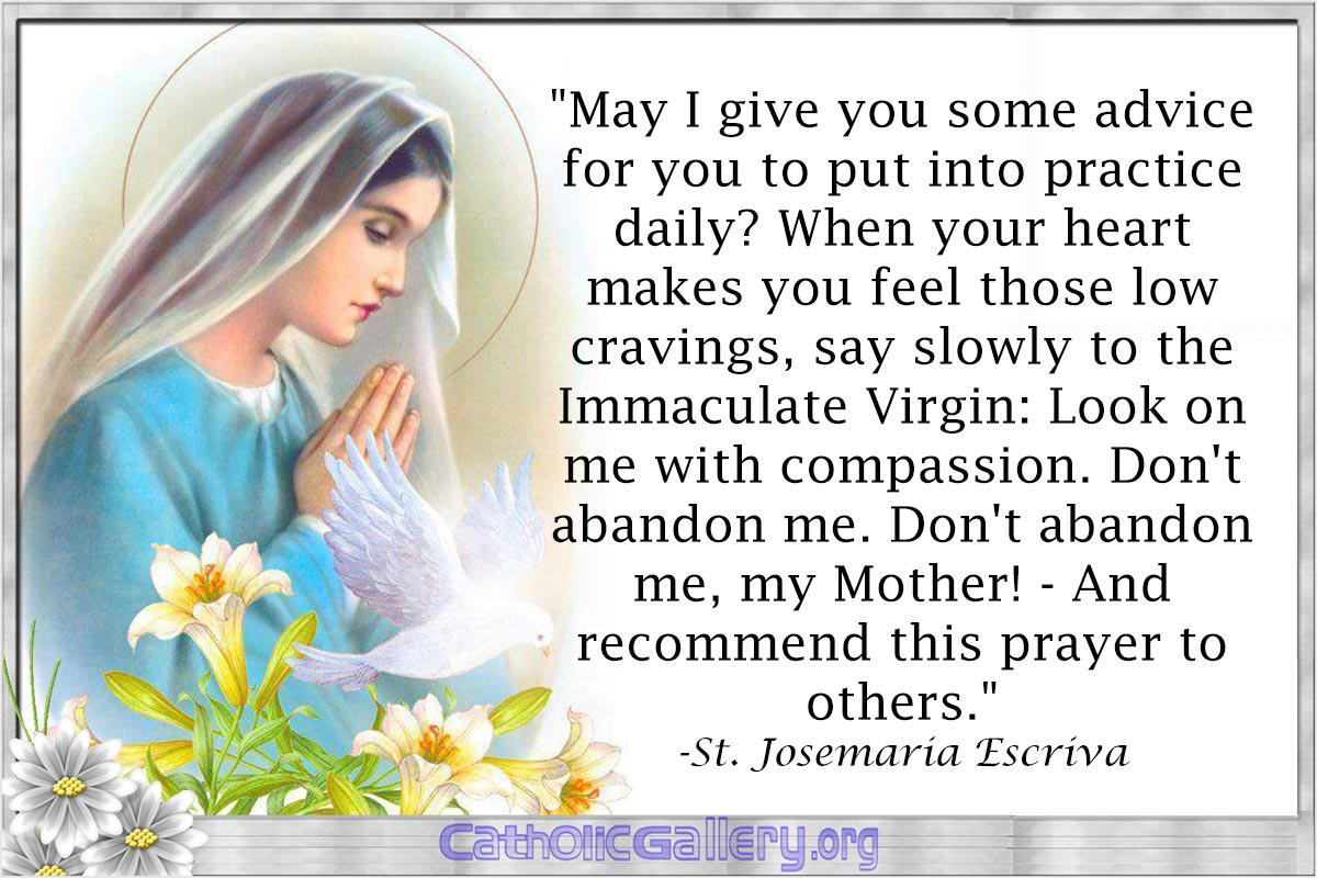 Todays Prayer Quotes Quotes About Mary Pictures  Page 4  Catholic Gallery